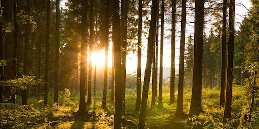 Naturpark-Führung Sauerland-Rothaargebirge: Krenkeltal und Goldener Zapfen