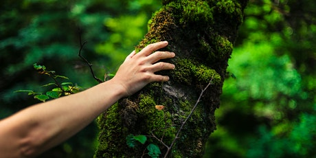 The Art & Science of Forest Bathing & Forest Therapy tickets