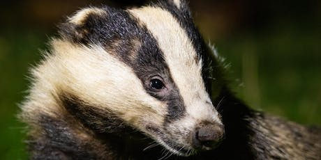 Haweswater Badger Hide: Exclusive Hire tickets