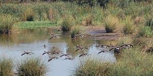 Members Only WSF Birding Walk 2