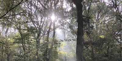 Buckinghamshire Autumn Wild Food Foraging Course/Walk