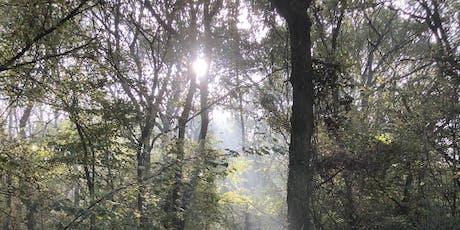 Buckinghamshire Autumn Wild Food Foraging Course/Walk tickets