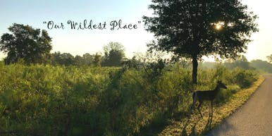 Our Wildest Place