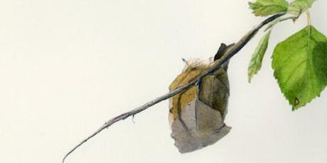 Botanicals, Beetles, and Birds: Scientific Illustration tickets