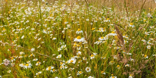 MAINTAINING A WILDFLOWER MEADOW with Thomas Stone