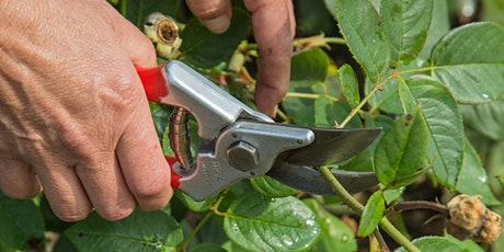 ROSE PRUNING WORKSHOP With Thomas Stone tickets