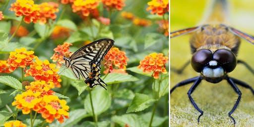 In Search of Butterflies & Dragonflies