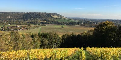 Spring Wine Walk in the Surrey Hills