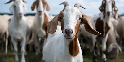 All About Goat Cheese