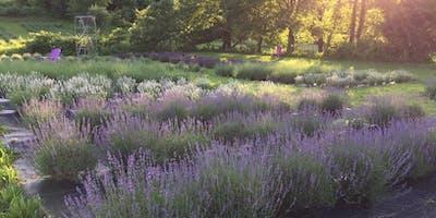 Serene Lavender Farm Open House #2