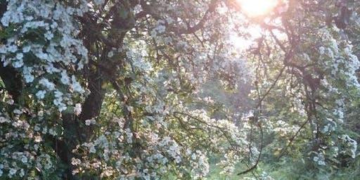 Forest Bathing - Twilight wanders
