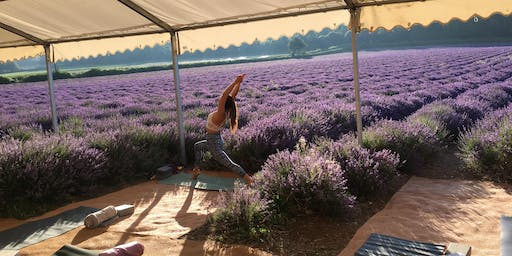 Yoga in the lavender fields Thursday 4th