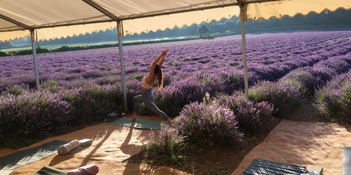 Yoga in the lavender fields Thursday 18th
