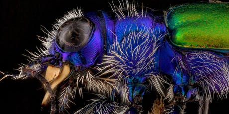 Atlas Obscura Society Denver: Discover the Fascinating World of Beetles tickets