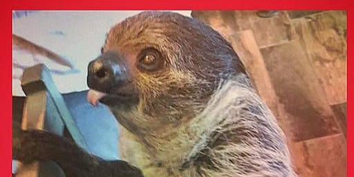 Slow your Roll- Meet & Greet with Steve the Sloth (Adult Only)