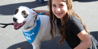 Ruffs to Riches: How Wags & Walks Is Changing the Way LA Rescues Dogs