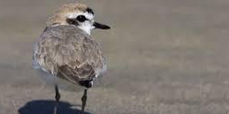 Shorebirds of Point Reyes tickets