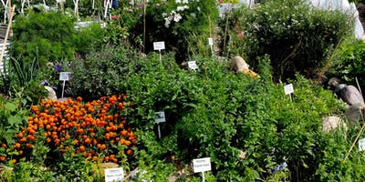 Embrace Gardening - All About Herbs