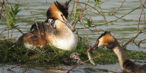 Digital wildlife photography birds