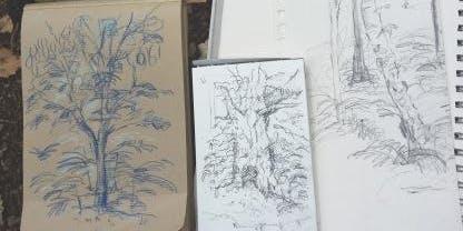 Woodland Sketching