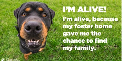 Moorlands Dog Rescue - An Introduction To Fostering Seminar