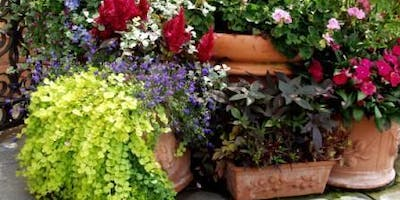 Container Gardening with Pinky