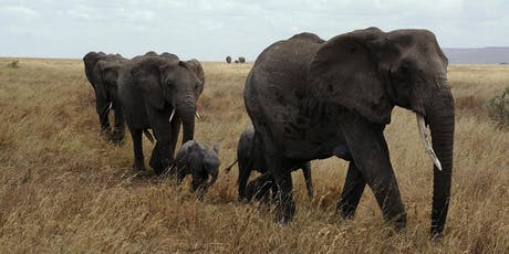 Elephantopia's Can't Tu5K This 5K tickets