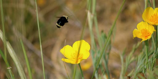 Siskiyou Crest Posies & Pollinators