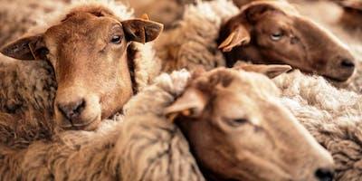 Exclusief abonneemoment - Wandeling met de herder en schapen