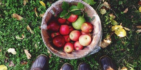 Apple Picking & Corn Maze Adventure via Direct Bus from NYC tickets