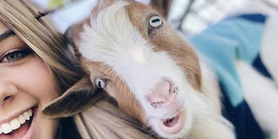 Goat Yoga in HASLET, TX!