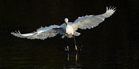 Photo Workshop: Wading Birds of Florida  tickets