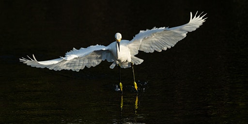 Photo Workshop: Wading Birds of Florida with Optional Trip to Blue Cypress Lake