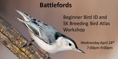 Battlefords - Beginner Bird ID and Breeding Bird Atlas Workshop
