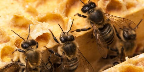 Essex Beekeepers Association 2019 Annual Conference tickets