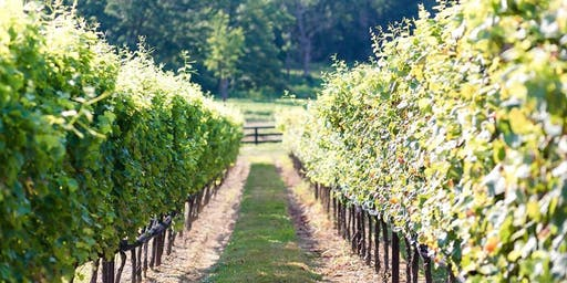 Vines to Wines Tour