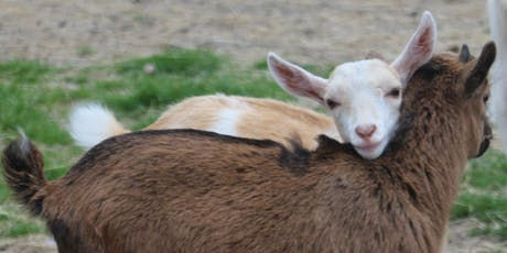 Lil Country Goat Yoga tickets