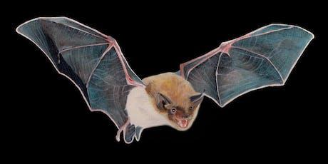 Summer Bat Walks 2019 tickets