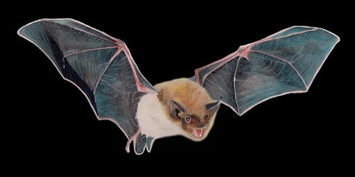 Summer Bat Walks 2019