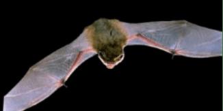 Bat walk at Leybourne