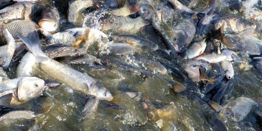 Agro Fish Farming Venture Educating Future Leaders For Economic Growth