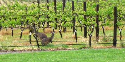 Wine Class - Just Trust Me: Australia Edition