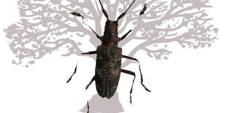 Treizième rencontre du Groupe des Entomologistes Forestiers Francophones billets
