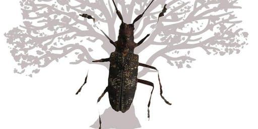 Treizième rencontre du Groupe des Entomologistes Forestiers Francophones
