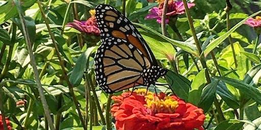 Workshop | Butterflies for Beginners