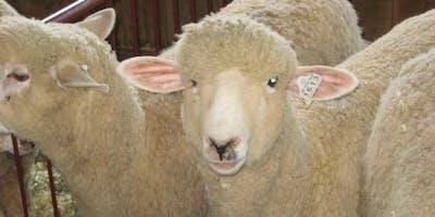 2019 Massachusetts Sheep & Woolcraft Fair