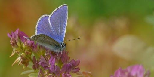 Butterflies at Bishop Middleham Quarry