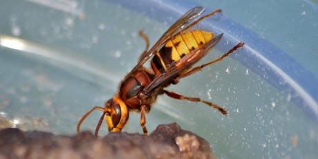Introduction to Invertebrates at Gosforth Park Nature Reserve tickets