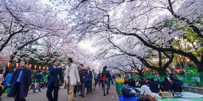 Japan Spring Cherry Blossom Tour 2020 Fundraiser Online Event