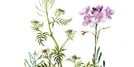 An Introduction to Botanical Art
